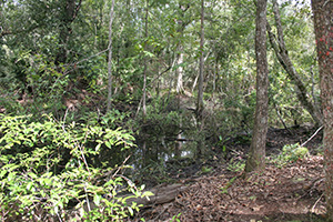 Pine Lily Preserve