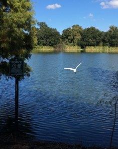 Crystal Lake Neighborhood Park